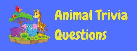 A selection of testing animal trivia questions to give your brain a workout