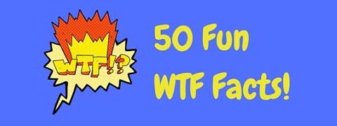Fun WTF facts to astound and amaze!