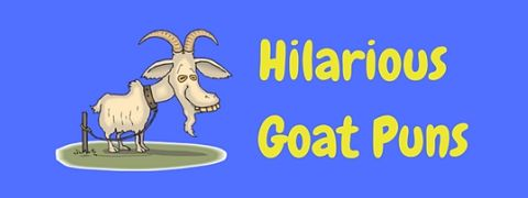 Featured image for a page of hilarious goat puns.