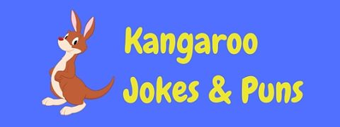 Featured image for a page of funny kangaroo jokes and puns.