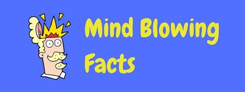 These cool facts are sure to blow your mind