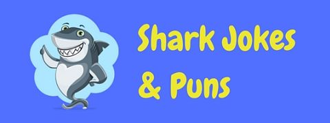 A collection of funny shark jokes and puns