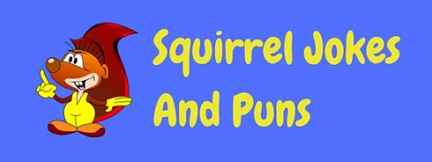 Featured image for a page of funny squirrel jokes and puns.