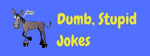Page of the most dumb and stupid jokes and humor.
