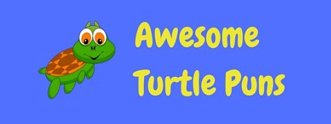 These turtle puns are turtley awesome!