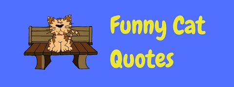 A selection of funny cat quotes and sayings.