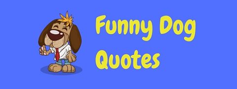 You'd be barking mad not to laugh at these funny dog quotes!