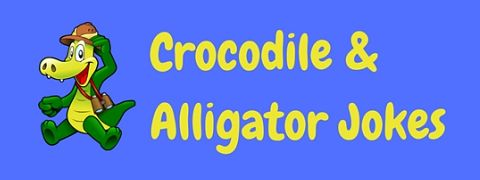 Here's a snappy collection of funny crocodile & alligator jokes and puns!