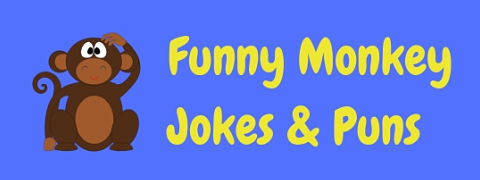A whole bunch of funny monkey puns and jokes!