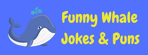 A great collection of funny whale puns and jokes!