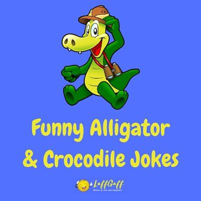 Featured image for a snappy collection of funny crocodile & alligator jokes and puns.