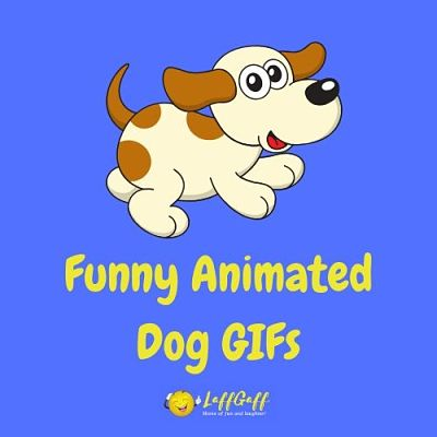 Featured image for a page of funny animated dog GIFs.