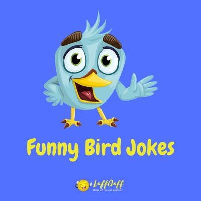 Featured image for a page of funny bird jokes and puns.