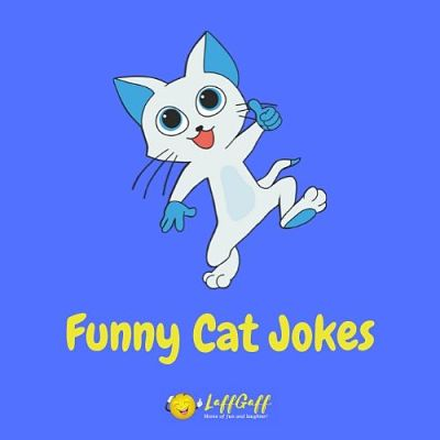Featured image for a page of funny cat puns and jokes.