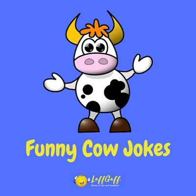 Featured image for a page of funny cow puns and jokes.