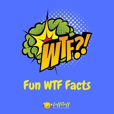 Featured image for a page of fun WTF facts to astound and amaze!