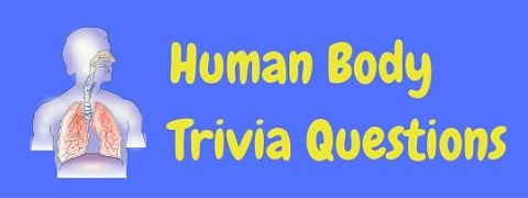 Header image for a page of anatomy and human body trivia questions and answers.
