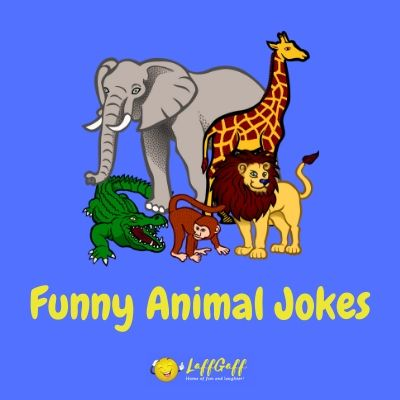 Featured image for collections of funny animals jokes and puns.