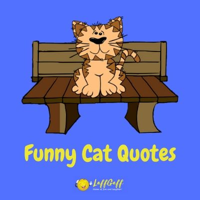 Featured image for a page of funny cat quotes and sayings.