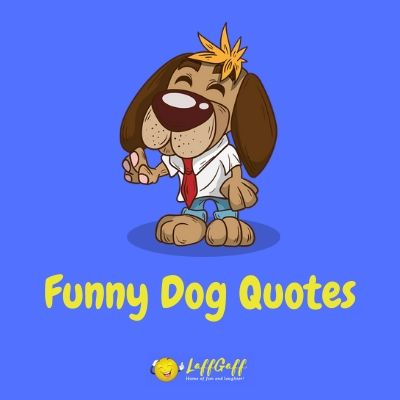 Featured image for a page of hilariously funny dog quotes that perfectly describe man's best friend!