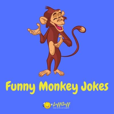 Featured image for a whole bunch of funny monkey puns and jokes!