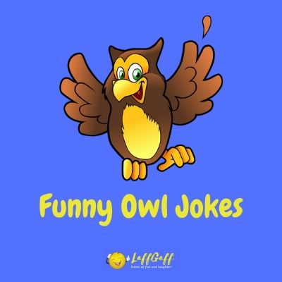 Featured image for a page of funny owl jokes and puns.