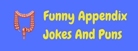 Header image for a page of funny appendix jokes and puns.