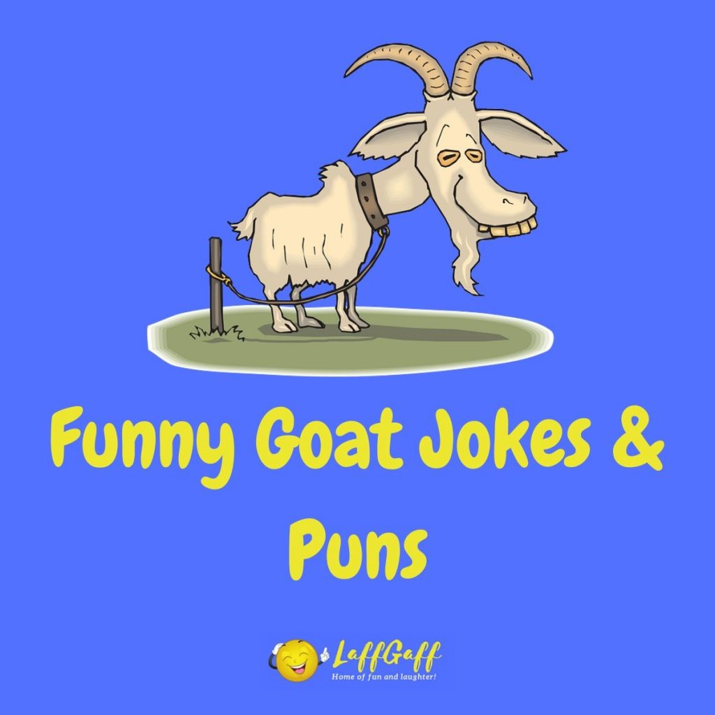 Featured image for a page of funny goat puns and jokes.