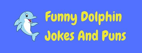 Header image for a page of funny dolphin jokes and puns.
