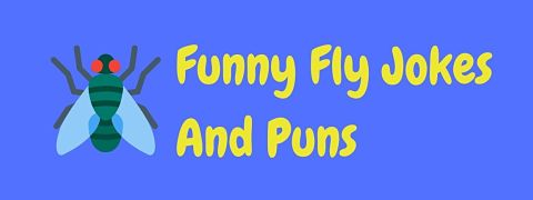 Header image for a page of funny fly jokes and puns.