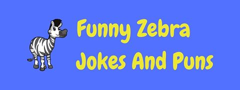 Header image for page of funny zebra jokes and puns.