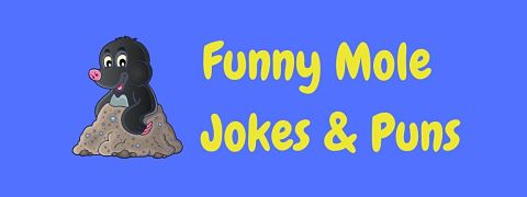 Header image for a page of funny mole jokes and puns.