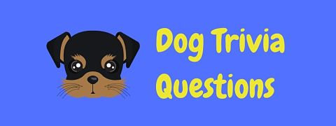 Header image for a page of dog trivia questions and answers.