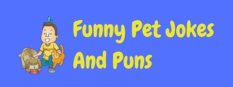 Header image for a page of funny pet jokes and puns.