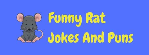 Header image for a page of funny rat jokes and puns.
