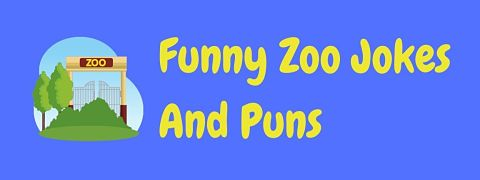 Header image for a page of funny zoo jokes and puns.