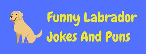 Header image for a page of funny Labrador jokes and puns.