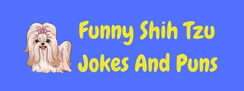 Header image for a page of funny Shih Tzu jokes and puns.