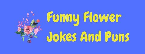 Header image for a page of funny flower jokes and puns.