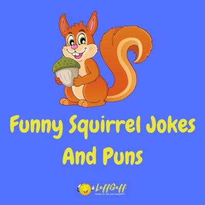 Squirrel Jokes And Puns