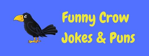 Header image for a page of funny crow jokes and puns.