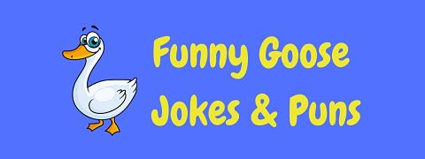 Header image for a page of funny goose jokes and puns.