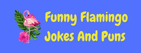 Header image for a page of funny flamingo jokes and puns.