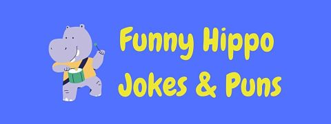 Header image for a page of funny hippo jokes and puns.