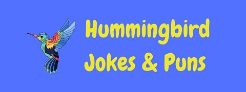 Header image for a page of funny hummingbird jokes and puns.