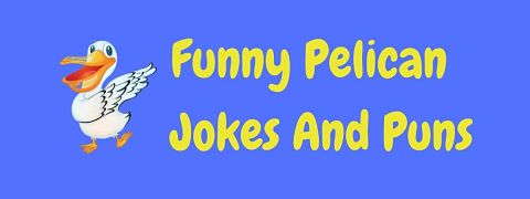 Header image for a page of funny pelican jokes and puns.